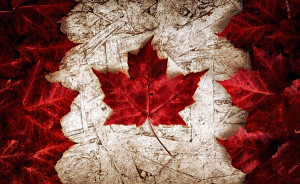 The image of the flag of Canada constructed entirely out of genuine maple leaves from species native to that country. Laid out on top of worn out particle board. ** Note: Shallow depth of field